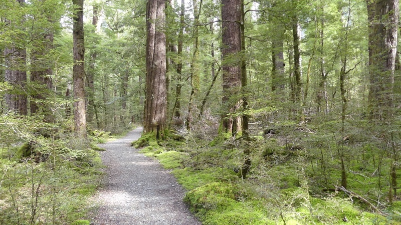 ルートバーントラック原生林の森