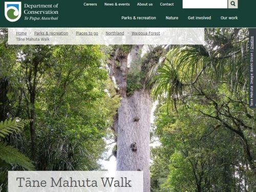 カウリの木タネマフタDOCページ